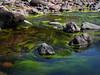 Río Loro (2) (Jorge José Orr) Tags: río agua algas tucumán