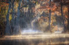 Swamp Things, Autumn (Appalachian Hiker) Tags: autumn swamp sunrise light rays water fall moss mist fog cypress tupelo
