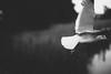 Annoyed (Jonas Tana) Tags: 50mm seagull 12l canon 5dmkiii