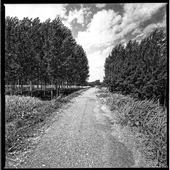 The Wind Makes You Feel Alive (film) (miskin69) Tags: hasselblad mediumformat square ilford panf50 zeiss distagon40 analogicait film monochrome 6x6 analog