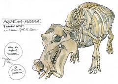Hippopotame (gerard michel) Tags: liège belgium museum hippopotame sketch croquis aquarelle watercolour