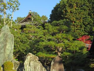 2305 Tofukuji Pines
