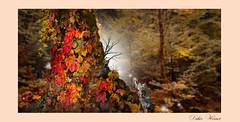 Une forêt carnavalesque (Didier HEROUX) Tags: automne autumn photoshop raw forest forêt photography didierheroux herouxdidier nature balade extérieur outdoor france arbre tree carnaval posttraitement retouche fantaisie rouge red orange alpes digital annecy ambiance atmosphère paint painting