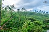 Valparai Worked-1-3 (RR Fotography) Tags: landscape teaestate estate tea forest mountains earlymorning mist fog leadinglines tree leaves water sceneary india southindia tamilnadu tn