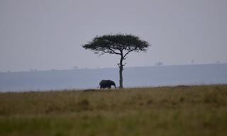 elephant sur horizon