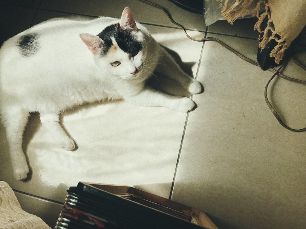 寵物寫真,寵物攝影,毛小孩