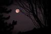 moonrise over false creek (chrisyakimov) Tags: falsecreekcooperativehousingassociation falsecreeksouth vancouver silhouette halloween moon falsecreek yvr autumn fall