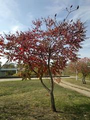 2017-10-14-11756 (vale 83) Tags: autumn tree nokia n8 friends flickrcolour coloursplosion colourartaward autofocus beautifulexpression
