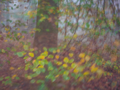 290/365 (Jane Simmonds) Tags: forestofdean woodland fog mist trees abstract lensbabytrio28mm 290365 3652017 autumn blur