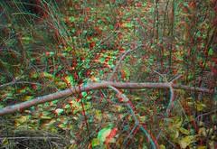 Golden Autumn 3D!3D anaglyph (3D VIDEO) Tags: amazing3d 3dvideo 3dphoto 3d 3dsbs best3dvideo tv3d 3dfortv 3dmovie 3dglasses 3dpopouteffects sidebyside 3dfilm popout amazing beautiful virtual 1080p box anaglyph glassesanaglyph autumn positive golden journey forest fantastic 2017 hd