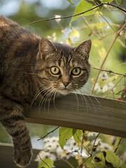 Le sens du jeu ** (Titole) Tags: gaïa titole nicolefaton cat perched thechallengefactory