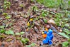 Morning Walk in nature! It really is nice to take a break from the city! ❤️ (parik.v9906) Tags: walking early morning leaves fun outdoors macro days 365project 365 minifigure minifigures minifig jungle woods d90 nikon nature legos lego