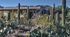 Arizona-Sonora desert museum (JoelDeluxe) Tags: arizonasonora desert museum tucson az joeldeluxe cacti heat plants wildlife zoo botanical garden minerals displays gardens birds