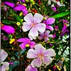 Cores da natureza. #flores #flowers #florzinha #florzinhalinda #naturalbeauty #natureza #naturephotography #jardim #floreslindas #floramarela #revistaxapury #eunotg #criacaodedeus #obradivina #instaflowers #instaflores #motox2 #instamotox2 #garden #floric (ederrabello2014) Tags: naturalbeauty naturephotography instalike flores manacadaserra jardim motox2 intagrambrasil floramarela garden florzinhalinda flowersbouquet revistaxapury flowerslovers instaflores eunotg floricultura instamotox2 florzinha flowerstagram natureza floreslindas instaflowers criacaodedeus manaca intagram obradivina flowersofinstagram flowers