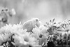 Lola (Earth Rise) Tags: hamster hamsters dwarf flowers animal animals