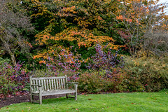 20171015-IMGP0666 (rob mulf) Tags: nymans pentax westsussex greatbritian england outdoors nature