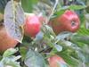 Apples (Artybee) Tags: blair castle caravan park atholl clan murray glen garry scottish highlands victoria tv series apples