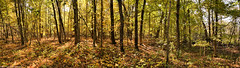 Forest Panorama (David C. McCormack) Tags: country eos eos6d environment farm landscape midwest nature inspiration outdoor panorama rural wisconsin