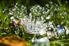 Goodbye to Summer (Darrell Wyatt) Tags: sprinkler water lawn summer