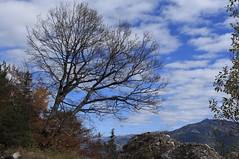 automne (bulbocode909) Tags: valais suisse automne arbres nature montagnes nuages bleu paysages