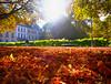 Autumn leaves in Grenoble, France (` Toshio ') Tags: toshio france grenoble europe french park leaves fall autumn light european europeanunion fujixt2 xt2 bench trees