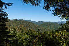 Hwy 101 CA-OR July 2018-11 (ntisocl) Tags: 2017 california californiacoast canon1dmarkiii hwy101 pacificnorthwest redwoodhwy treesofmystery redwoods roadtrip roadsideattraction trees