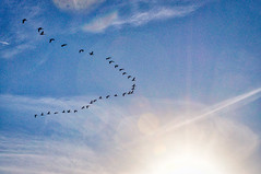 southbound (avflinsch) Tags: ifttt 500px park sky geese flare flock early morning southbound