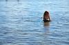 Violet And Her Boogie Board (Joe Shlabotnik) Tags: justviolet july2017 higginsbeach violet boogieboard 2017 maine ocean beach afsdxvrzoomnikkor18105mmf3556ged