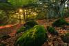 The first ray of light (Tekila63) Tags: forest autumn leaves fall sunshine sunrise auvergne fairy mood moss sunburst