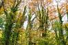 The Guardians (mmalinov116) Tags: tree forest green beautiful beauty guardians nature earth bulgaria autumn българия ngc