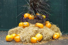 Halloween (rotabaga) Tags: sverige sweden göteborg gothenburg pentax k5 liseberg halloween orange brandgul