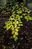 L1010045 (Rene_1985) Tags: leica q 28mm summilux asph mirrorless fall herbst leaf blätter wald forst farben bokeh dof