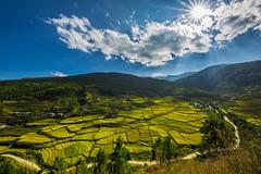 Golden Valley (AvijitNandy) Tags: bhutan