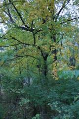 IMG_5421 (davekremitzki) Tags: new salem state park illinois