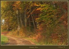 Herbstliche Farben (Renata1109) Tags: wald weg herbst baum bäume autumn farben laub sonne holz gras landstrase feldweg bayern bavaria bunt