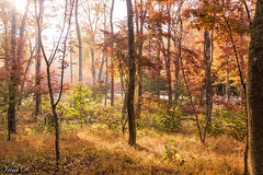 Misty morning (Irina1010) Tags: trees colors foliage autumn light morning mist fog november beautiuful nature woodland canon gibbsgardens landscape outstandingromanianphotographers coth5 ngc npc