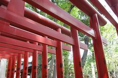 富岡八幡宮 画像23