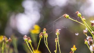 Spider art...