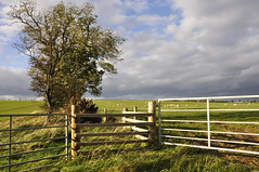 Autumn Afternoon (magaroonie) Tags: gates fences east lothian 7daysofshooting week15 barrier geometrysunday