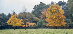 20171015-IMGP0784 (rob mulf) Tags: nymans landscapes pentax westsussex greatbritian england outdoors nature