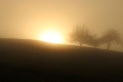 Morgennebel (gripspix) Tags: 20171016 nature autumn herbst nebel mist morgtennebel trees bäume