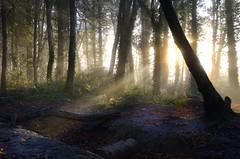 Balrath Woods Co Meath Ireland Sunrise (MadeleineVanWijkPhotography) Tags: