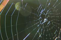 IMG_0375 (ultomatt) Tags: spectacular spider spiders spiderweb spiderwebs beauty beautiful nature natural chromatic rainbow rainbows naturalbeauty
