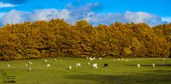 Autumn's lights (simone_aramini) Tags: landscape outdoor mountain montagna umbria umbrialandscapes paesaggi naturallight nikon nationalgeografic ngc nature