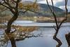 Loch Chon trough the trees (Uillihans Dias) Tags: kinlochard scotland unitedkingdom gb lochchon greatbritain uk landscape trossachsnationalpark morning