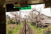 Tunel-Sakura-Kioto-Randen-51 (luisete) Tags: hanami japan randen túneldesakura tranvía tramway japón kioto kyoto