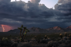 Twilight Desertstorm (Maddog Murph) Tags: twilight lightning storm thunderstorm thunder clouds cumulus bolt electricity cactus joshua tree barrel desert utah southwest monsoon season travel explore photography maddog murph