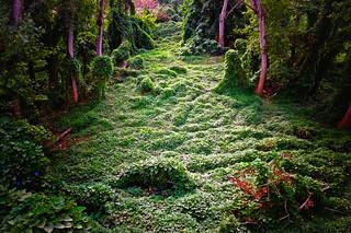 Bosque encantado (Enchanted Forest)