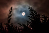 #43/52 Obscur (anneso duchemin) Tags: d750 nikon halloween night nuit lune moon
