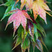 """Westonbirt Arboretum • <a style=""""font-size:0.8em;"""" href=""""http://www.flickr.com/photos/84132664@N06/26389857949/"""" target=""""_blank"""">View on Flickr</a>"""